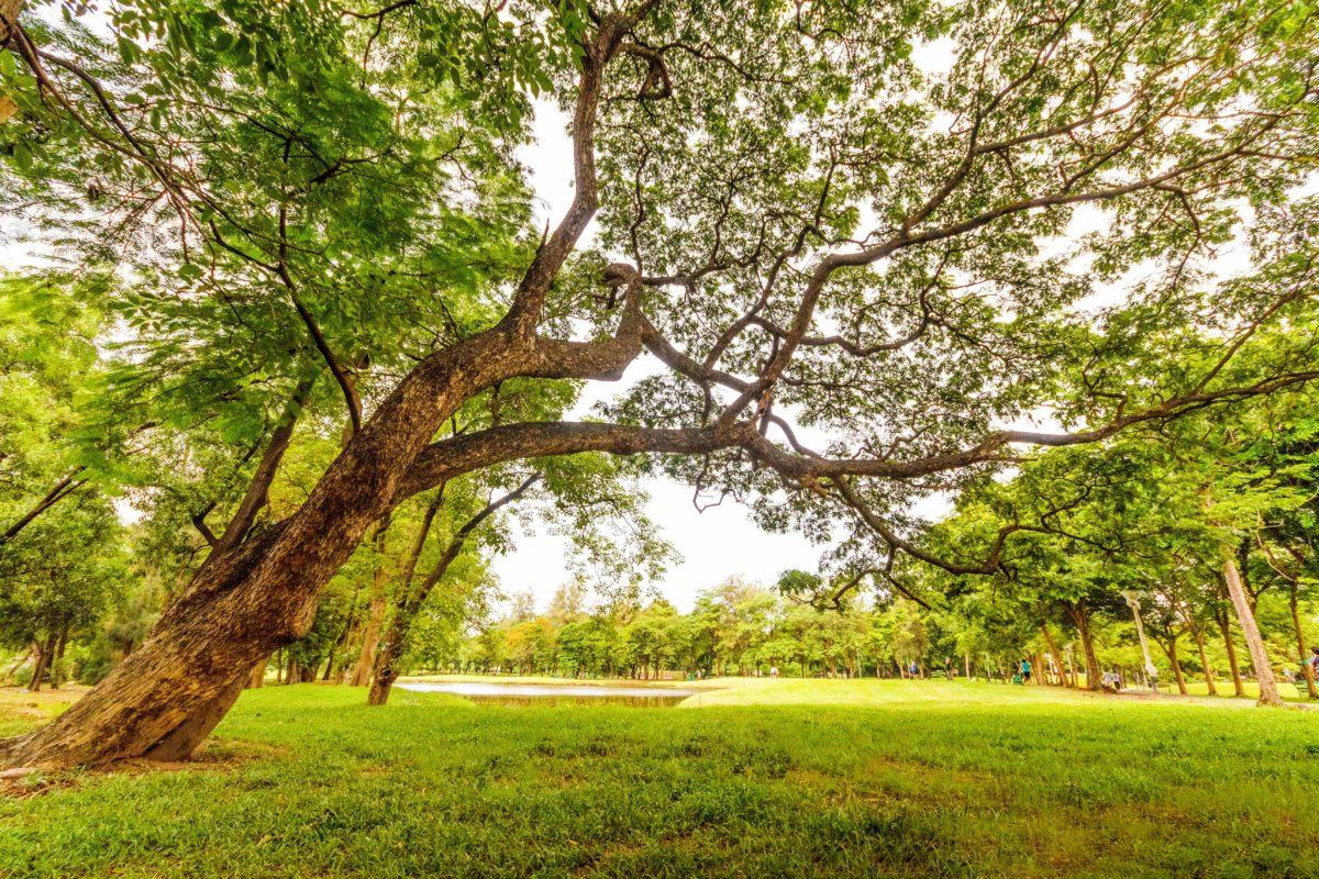 Hungal   Környezetvédelem